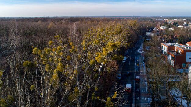 Miasto kupiło las od huty