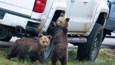 Kay Kotzian/Comedy Wildlife Photo Awards 2020