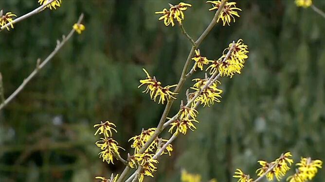 Jak ochronić rośliny ogrodowe <br />przed suszą fizjologiczną