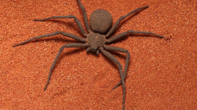 Kolonie karaluchów, jadowite pająki i pluskwiaki. Siedem tysięcy okazów ukradzionych z muzeum